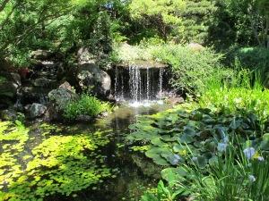 lush-garden